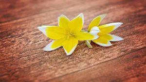 La vitalidad del amarillo en la cocina